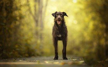 природа, мордочка, взгляд, собака, друг