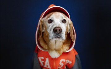 muzzle, look, dog, each, hood