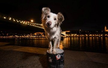 light, night, water, the city, look, dog, each, viktor valter, hailey