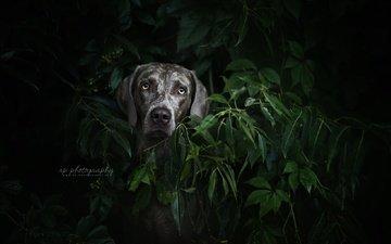растения, листья, мордочка, взгляд, собака