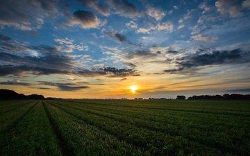 небо, облака, восход, солнце, природа, пейзаж, поле, горизонт, ферма