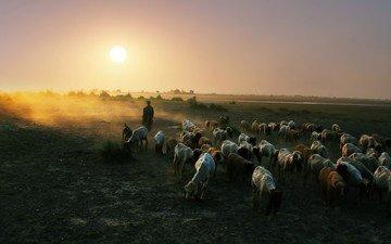 природа, закат, пейзаж, овцы, пастух