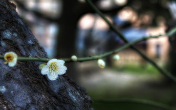 flowers, branch, flowering, spring, bokeh, drain