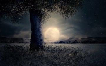 ночь, дерево, пейзаж, луна