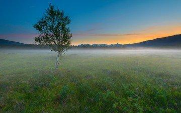 небо, восход, дерево, пейзаж, туман, горизонт