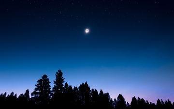 небо, ночь, деревья, природа, луна, силуэт