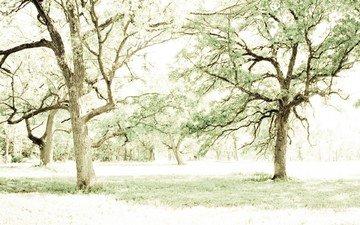 light, trees, branches, trunks, summer