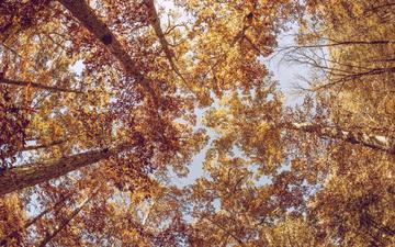 trees, leaves, branches, trunks, autumn, bottom view