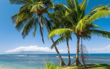 солнце, море, побережье, пальмы, сша, тропики, гавайи