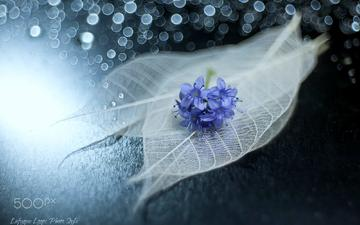 flowers, leaves, macro, glare, veins, still life, lafugue logos