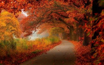 road, trees, forest, leaves, park, autumn