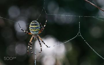 макро, роса, капли, размытость, паук, паутина, leo pöcksteiner