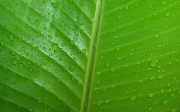 nature, green, drops, sheet, veins, water drops, closeup