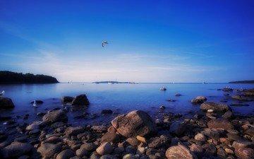 небо, вечер, природа, камни, берег, море, горизонт, птицы, чайки