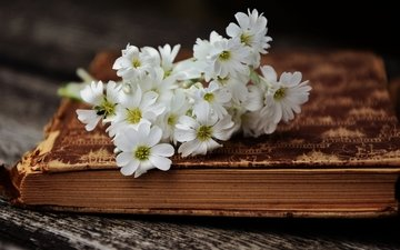 flowers, a bunch, book, still life, page