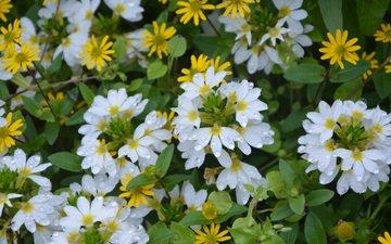 цветы, растения, листья, лепестки, белые, желтые