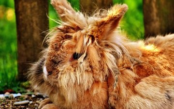мордочка, взгляд, пушистый, ушки, кролик, животное, милый