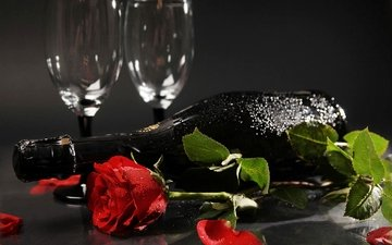 flower, rose, petals, bud, bottle, glasses, champagne, red rose