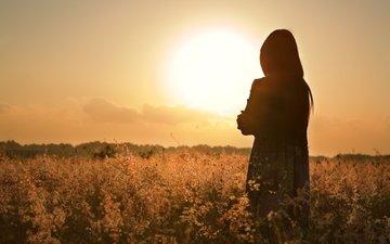 девушка, настроение, поле, закат солнца, волосы, вид сзади