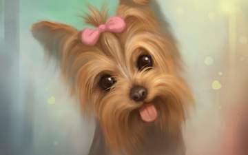 арт, мордочка, взгляд, собака, язык, милый, йоркширский терьер