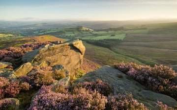 the sky, flowers, horizon, england, valley, heather, the peak district