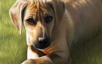 арт, трава, мордочка, взгляд, собака, уши