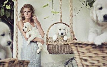 девушка, платье, блондинка, взгляд, кудри, волосы, лицо, щенки, собаки, вьющиеся волосы, корзины