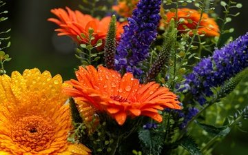 flowers, drops, petals, bouquet, gerbera, veronica