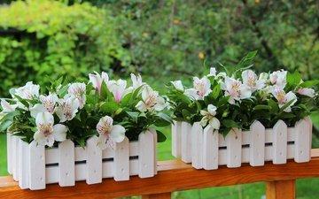 цветы, лето, лепестки, декорация, альстромерия