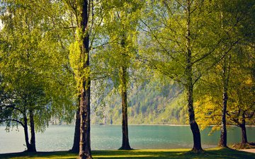деревья, озеро, природа, березы, швейцария, весна