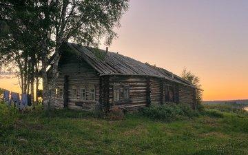 трава, березы, лето, деревня, дом, архангельская область, печище