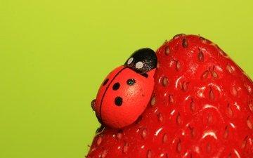 насекомое, ягода, клубника, божья коровка