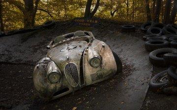 лес, осень, автомобиль, шины