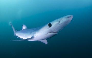 вода, море, акула, подводный мир
