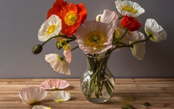 цветы, бутоны, лепестки, маки, букет, ваза