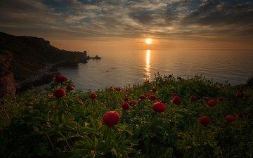 the sky, flowers, the evening, nature, shore, sunset, landscape, sea, horizon, hill, peonies, vesela marinova