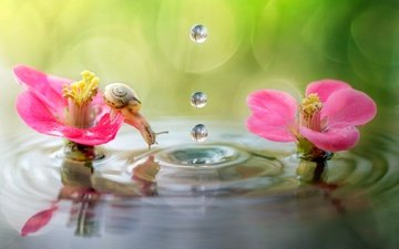 flowers, water, macro, reflection, drops, snail