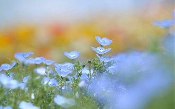 flowers, greens, petals, glade, blur, spring, blue, len