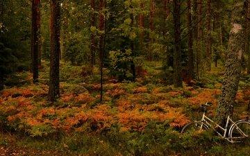 деревья, лес, осень, папоротник, велосипед, финляндия, ханко