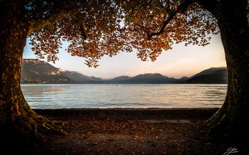 trees, lake, mountains, leaves, branches, autumn