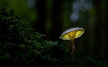 trees, nature, mushroom, moss