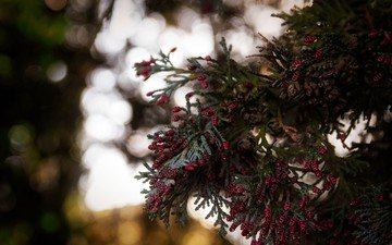 branches, bumps, wood, branch, bokeh, with, red