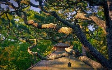 дерево, ветки, домик, сан-франциско, калифорния, japanese tea garden, парк золотые ворота