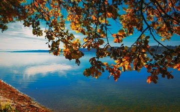 the sky, nature, tree, shore, leaves, branches, horizon, autumn