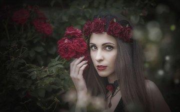 листья, девушка, ветки, розы, взгляд, модель, волосы, лицо, венок, боке