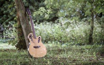 трава, деревья, гитара, музыка