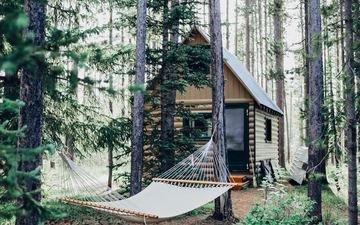 деревья, лес, стволы, дом, гамак, строение, cara fuller