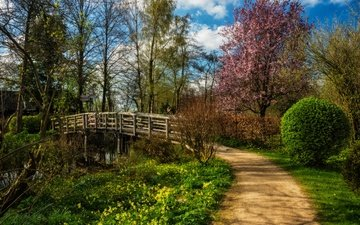 the sky, grass, clouds, trees, the sun, flowering, track, the bushes, bridge, spring, river, netherlands