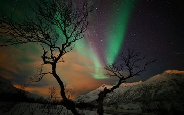night, mountains, snow, tree, winter, stars, northern lights