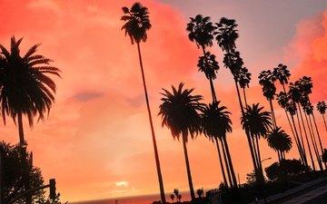рассвет, лето, город, пальмы, тропики